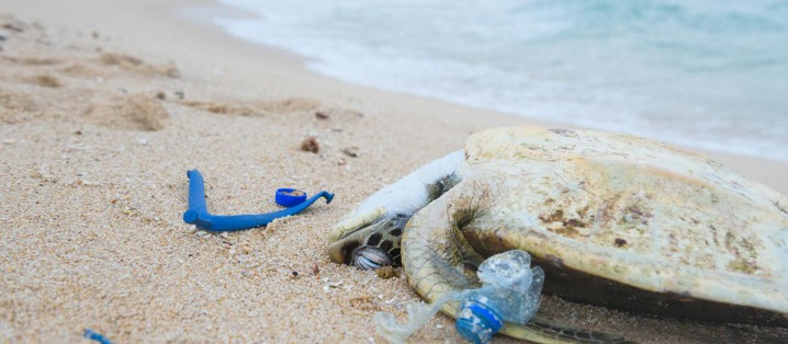 プラスチック 環境 問題